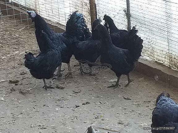 Γκέτο μαύρη γιαγιά πορνό